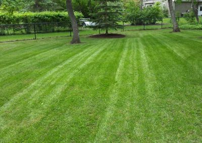 lawn-care_gallery6